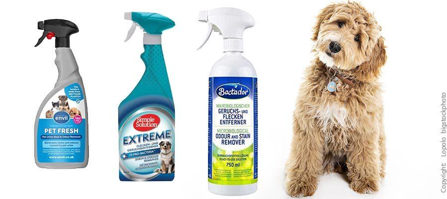 Hunde-Urin Reiniger für Doodle